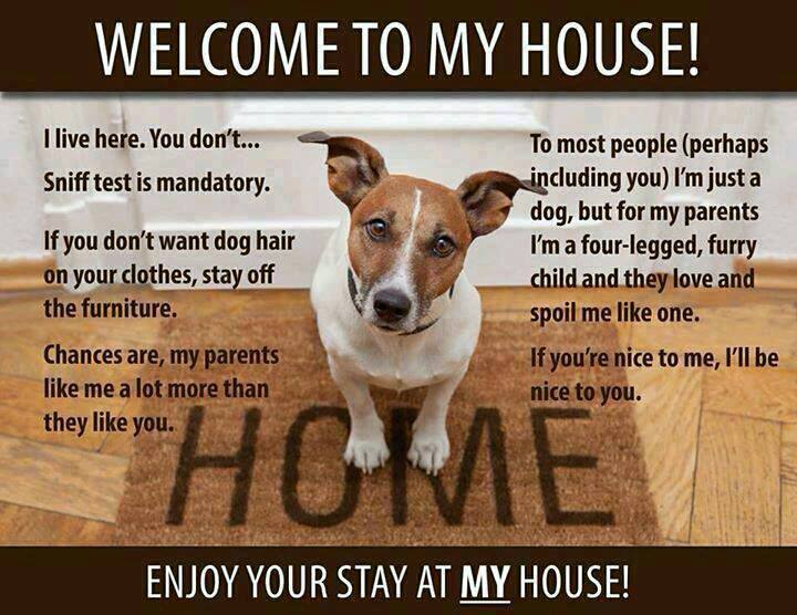 Doggy jokes stonehouse dog training club for Love the house you have